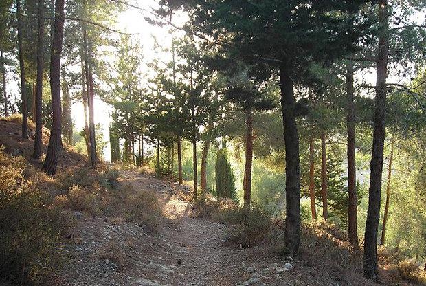 Česká společnost přátel Izraele Masarykův-les Revitalizace Masarykova lesa v severním Izraeli Novinky